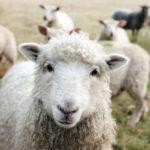 Mode, déco, beauté… pourquoi j'en ai marre des moutons