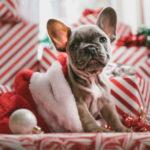 13 profils d'acheteurs de cadeau de Noël